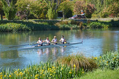 Rowers on the Avon River, Christchurch. Stock Photography