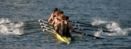 Rowers dans l'action photo stock