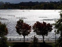 Rowers de fleuve de Charles Images stock
