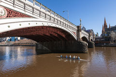 Rowers de la mañana en el río de Yarra, Melbourne Australia Foto de archivo libre de regalías