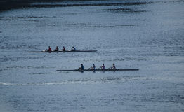 Rowers on the Ottawa River royalty free stock photography