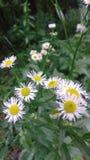 Roweru śladu kwiaty Obrazy Royalty Free