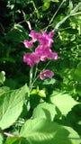 Roweru śladu kwiaty Obrazy Stock