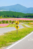 Roweru pas ruchu dla cyklisty Zdjęcia Stock