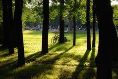 Rowery opuszczali wśród drzew w nasłonecznionym zieleń parku fotografia royalty free