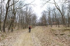 Rowerzysta w lesie zdjęcie royalty free