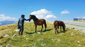 Rowerzysta z koniami przy górą w Rumunia obraz stock