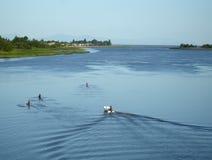 rowing практики утра Стоковые Изображения