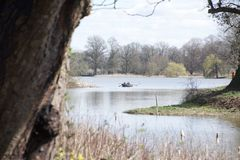 Rowing boat on a lake; reedbeds and tree in foreground stock photo
