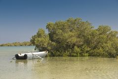 Rowing boat next to Mangrove trees. Stock Photo