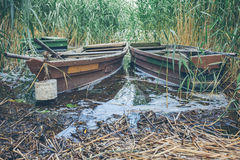 Rowing boats moored in reed Stock Photography
