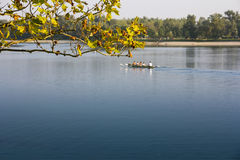 Rowing in the calm lake Royalty Free Stock Image