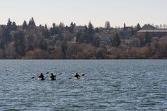 Rowing at Greenlake stock photo