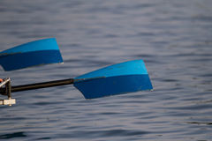 Rowing oars Stock Photo