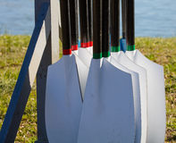 Rowing Oars Stock Photos