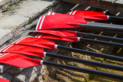 Rowing oars. With red blades Stock Photography