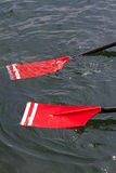Rowing oars. With red blades Stock Images
