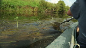 Rowing a paddle in the calm water of the river. stock footage