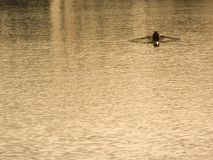 Rowing on the river. To float by a boat in the evening Stock Image