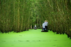 Rowing to Tra Su cajuput forest. The women serve tourists by rowing them through Tra Su Cajuput Forest in Vietnam Royalty Free Stock Photos