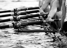 Rowing w/ Coxswain in Foreground. Hands of an Eight. A mens rowing team royalty free stock images