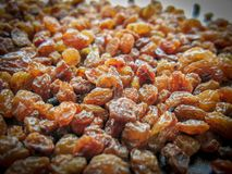 Rown raisins seamless background. Grape Raisin texture royalty free stock photos