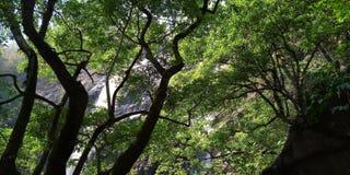 Rowns verdes del abedul y de árboles contra el cielo azul en primavera Imagen de archivo libre de regalías