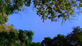Rowns verdes del abedul y de árboles contra el cielo azul en primavera Foto de archivo