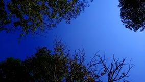 Rowns verdes del abedul y de árboles contra el cielo azul en primavera Imagen de archivo