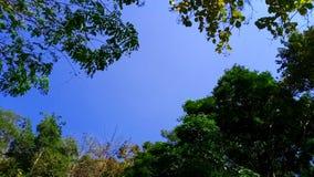 Rowns verdes del abedul y de árboles contra el cielo azul en primavera Imágenes de archivo libres de regalías