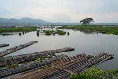 Rowo Jombor foto de stock