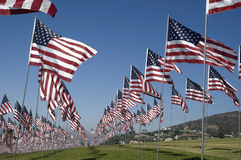 Rows of American Flags Royalty Free Stock Photo