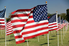 Rows of American flags. Flying in park Royalty Free Stock Photo