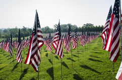 Rows of American Flags Royalty Free Stock Photos