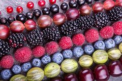 Rows of assorted fruits and berries: sweet cherry, bluberries, raspberries, red and black currant, blackberries. Helthy eating stock image