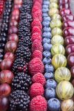 Rows of assorted fruits and berries: sweet cherry, bluberries, r stock photos