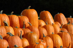 Rows of Autumn pumpkins Royalty Free Stock Image