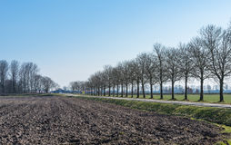 Rows of bare trees Stock Images