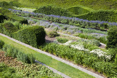 Rows of beautifully designed hedges Royalty Free Stock Photos