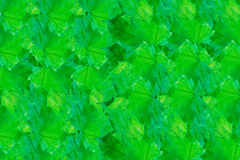 Rows of bright green leaves Stock Images