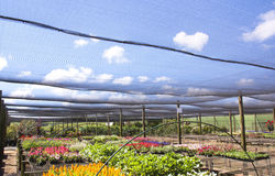 Rows Of Brightly Colored Nursery Plants Under Shadecloth Royalty Free Stock Photo