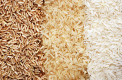 Rows of brown, wild and white rice Royalty Free Stock Image