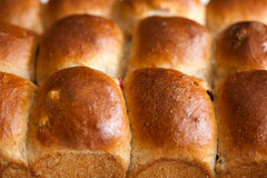 Rows of buns Royalty Free Stock Photography