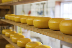 Rows of cheese maturing in factory Stock Photography