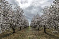 Spring forward. stock photography