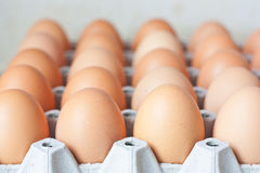 Rows of chicken eggs in carton Royalty Free Stock Photos