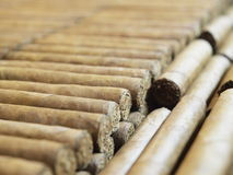 Rows of cigars. A closeup, detailed view of rows of tobacco cigars royalty free stock image
