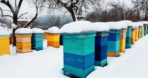 Colorful beehives covered in snow stock footage