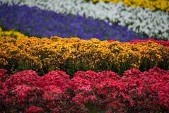 Rows of Colour Stock Photos
