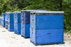 Blue bee hives in the field at Thassos. Rows of Coloured beehives in the field at Thassos Stock Photography